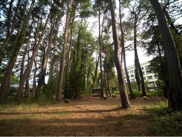 Pine Grove Abhazija slika