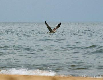 Таманский залив черного моря: фото и достопримечательности