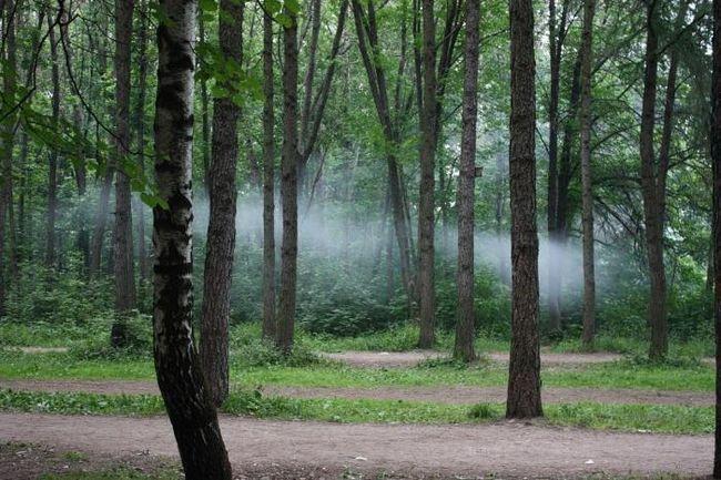 Timiryazevskiy park