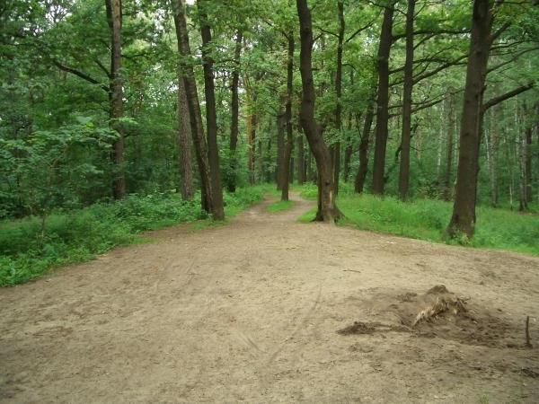 Timiryazevskiy Park Moskva