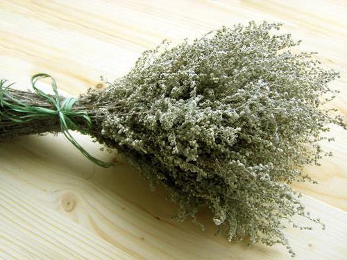 Artemisia recenzije