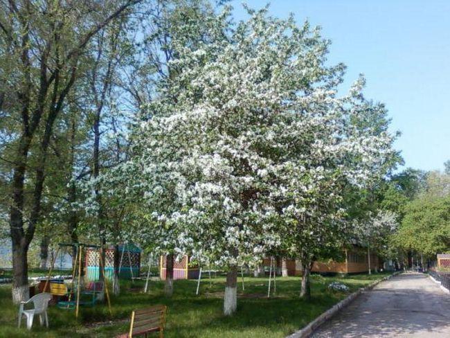 Samara domovi