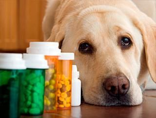 Ветеринарные клиники Днепропетровска: где лечить домашнего питомца?
