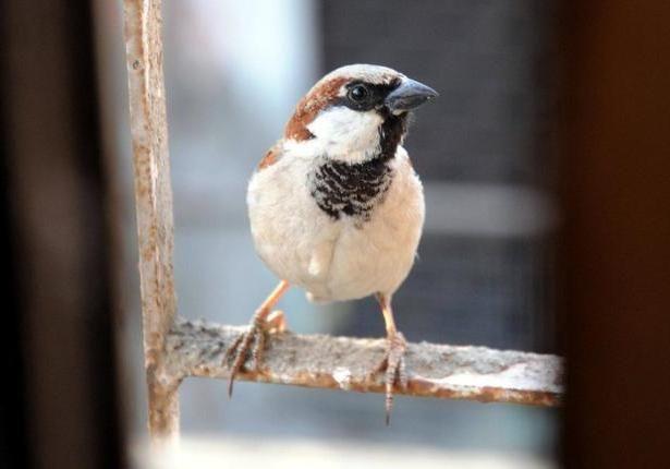 vrabac letio u kuću znak