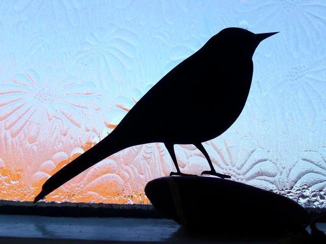vrabac letio u prozor