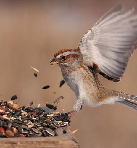 vrabac letio u kuću znakova