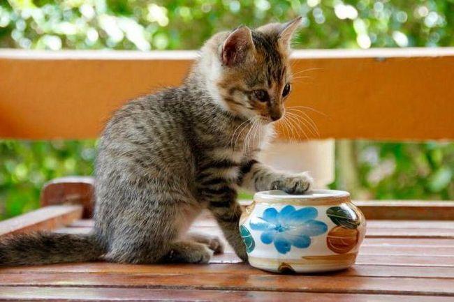 Жидкий стул у котенка: причины и лечение