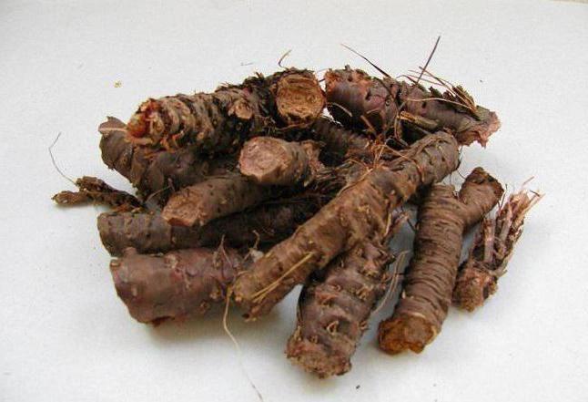 Золотой корень, или радиола розовая: полезные свойства для мужчин, инструкция, отзывы