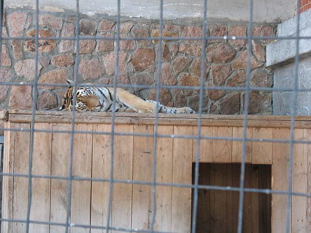 Čeljabinsk Zoo adresa