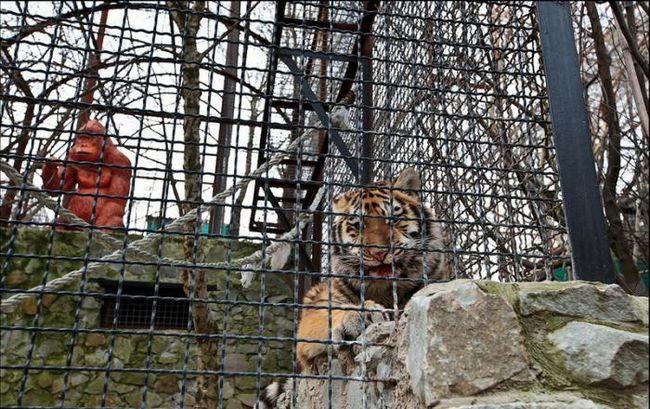 Jalta Zoo