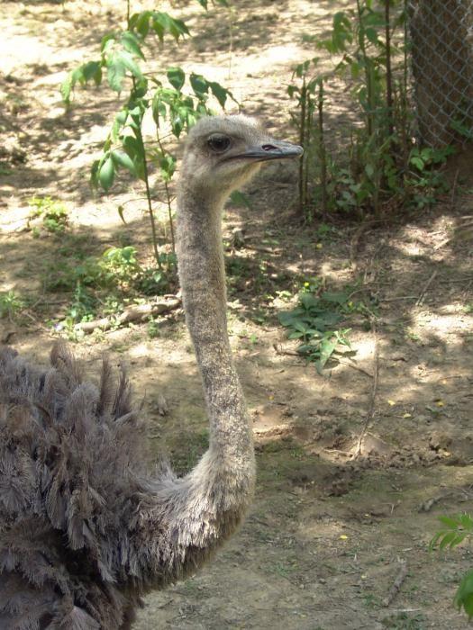 зоопарк мадагаскар нижний новгород как доехать