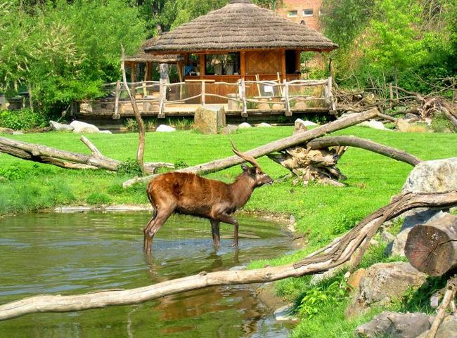 Зоопарк, прага - лучшее место для семейного отдыха