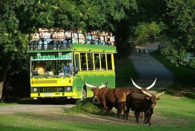 Zoo u Pragu kako doći