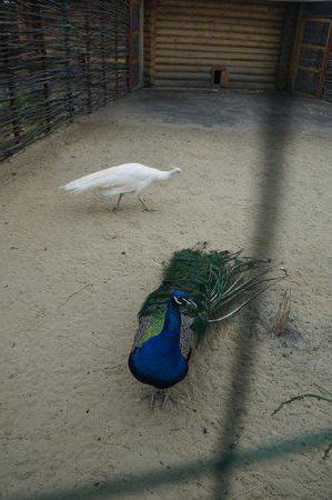 зоопарк в ряжске как доехать